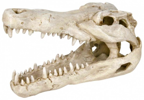 Trixie Krokodil-Schädel, 14 cm