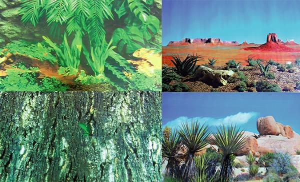 Trixie Fotorückwände in Wüsten- & Regenwaldoptik