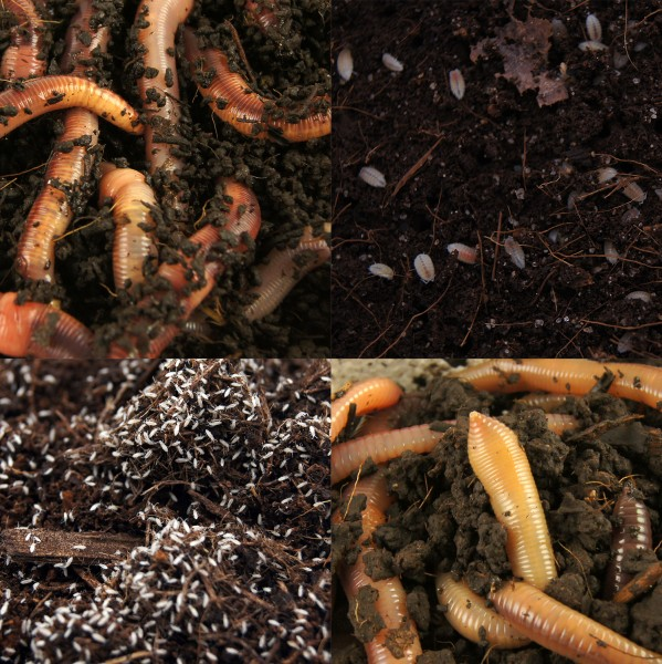 Starterpaket Biologisches Terrarium