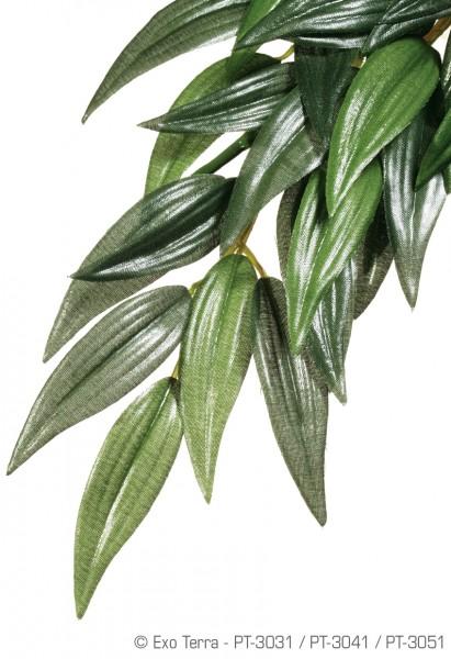 Exoterra Ruscus, hängende Regenwaldpflanze