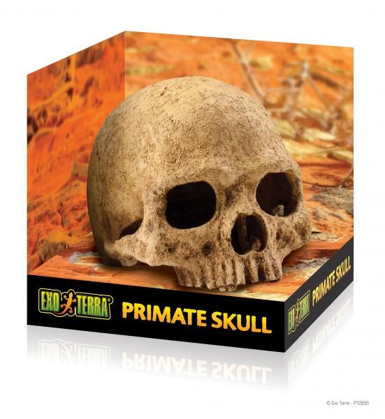 Exoterra Primate Skull, Totenkopfschädel