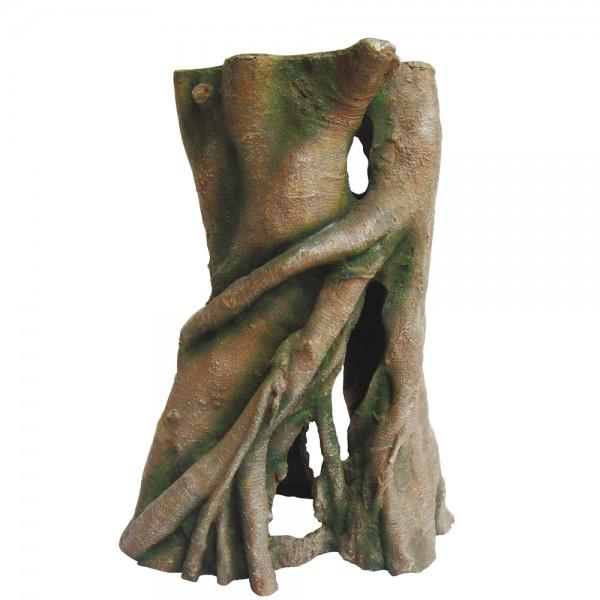 Hobby Azalea Root