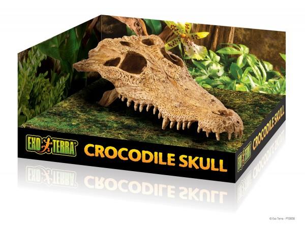 Exoterra Krokodil Skull, Krokodilschädel