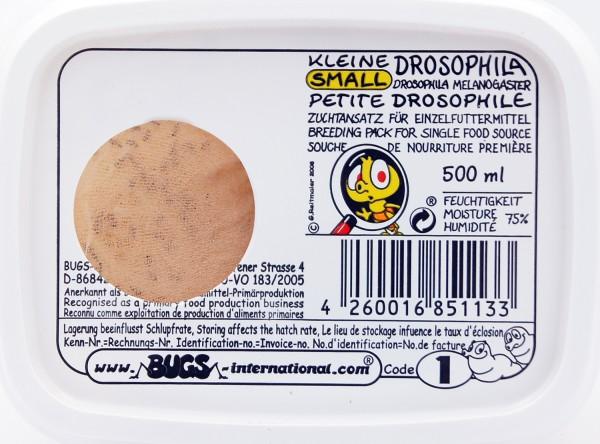 Kleine Drosophila- Fruchtfliege(drosophila melanogaster) flugunfähig Dose 0,5 Liter