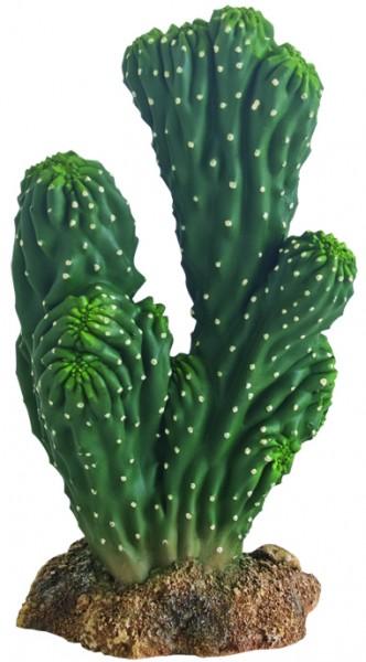 Hobby Kaktus Victoria
