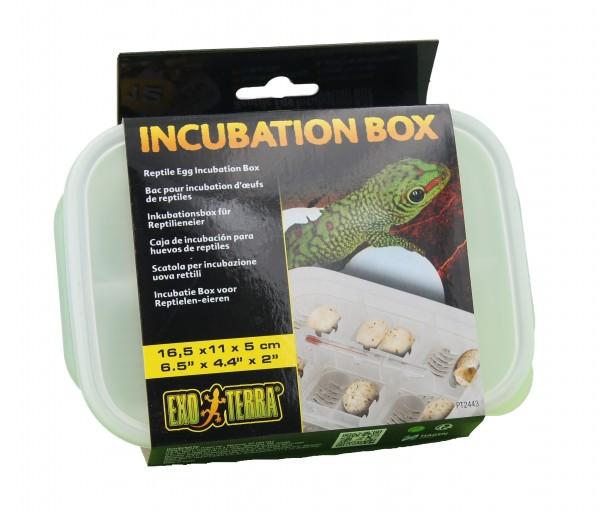 Exoterra Inkubations-Box