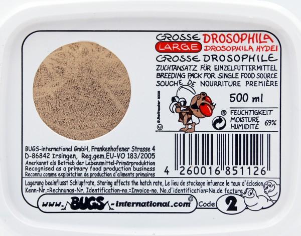 Große Drosophila- Fruchtfliege(drosophila hydei) flugunfähig Dose 0,5 Liter
