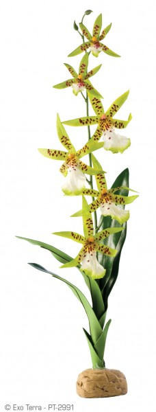Exoterra Spinnen Orchidee 6,5x5x45cm