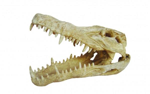 Lucky Reptile Deco Skull Krokodil, ca. 25x11,2x15,2 cm