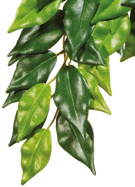 Exoterra Fikus, hängende Regenwaldpflanze
