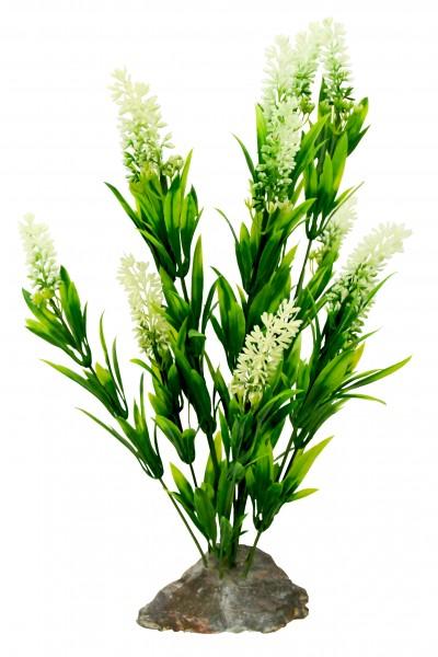 Lucky Reptile Borneo Gras, weiße Ähren, ca. 40 cm